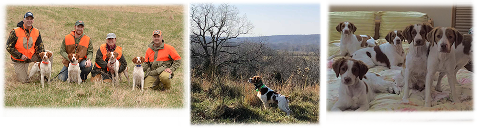 Sovereign Brittany | Hunting Dogs