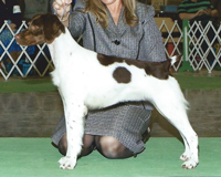 "Britany | CH Sovereign's Legendary Chocolate JH ""Godiva"""