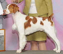 GCH. RIVERMIST BROXDEN SOVEREIGN