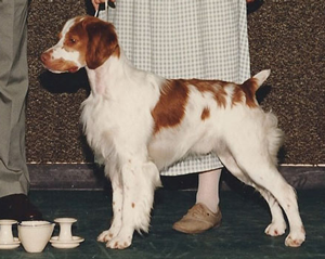 Sovereign's Know the Code | Brittany Spaniel