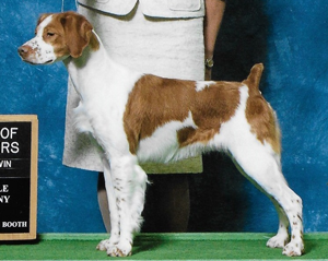 Sovereign's Legendary Mustang \ Female Brittany