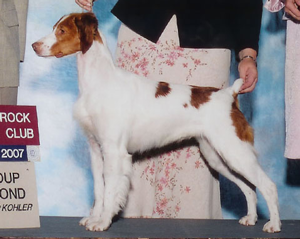 Sovereign's Brittany Pups
